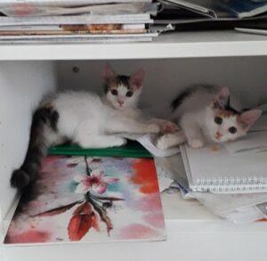 Юки и Нара